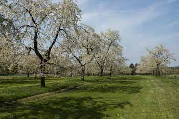 Unser Kirschgarten