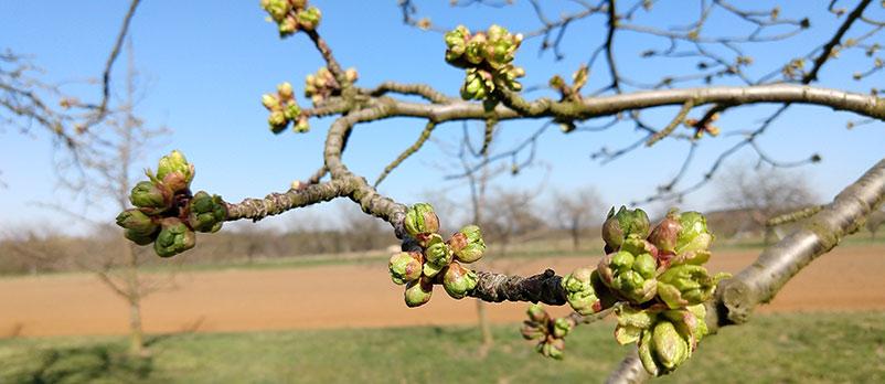 Das Frühjahr beginnt…